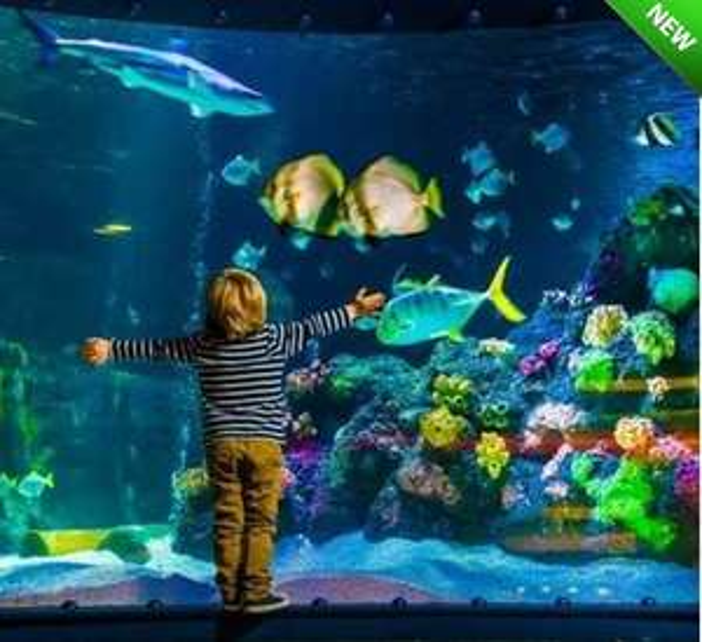SEA LIFE London Aquarium - Half Price Single Person Pass Only £15 @ Planet Offers