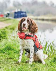 Rosewood Dog Life Jacket £9.99 in various sizes From Aldi + Delivery is £2.95 Free on order over £30 (UK Mainland )