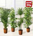 Large Green House Plants @ Lidl for £4.49