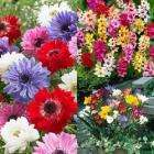 200 Spring Bulbs Collection for only £4.95 Delivered @ J Parkers (Plus 12 FREE Double Begonias)