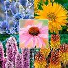 15 bareroot perennial plants, just pay £4.50 to cover postage @ Thompson and Morgan