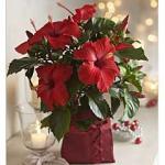 Christmas gifts SALE at Thompson & Morgan + FREE p&p until Mon 6th Dec