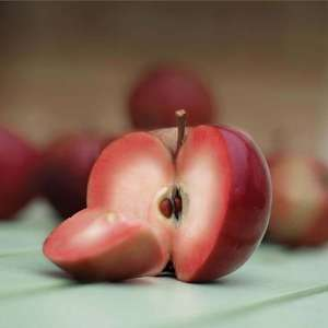 Apple 'Pixirosso' Tree 50% off £10.99 delivered @ thompson & morgan