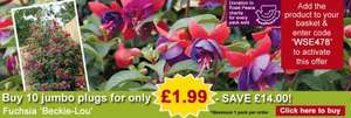 Fuchsia 'Beckie-Lou' - 10 jumbo plugs ONLY £1.99! + £4.95 post @ Thompson & Morgan