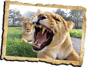 Longleat  Safari and Adventure park 3 for 2 on tickets and -15% if ordered on-line.