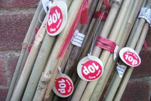 Pack of 5 6ft bamboo canes 10p at Wilkinsons