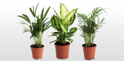 House Plants @ Aldi - £2.49