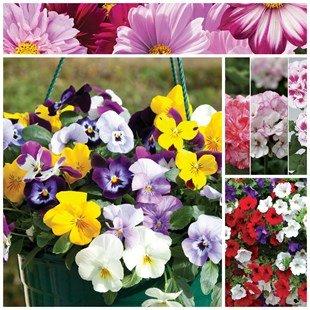 2 Hanging Baskets & 6 Plug Plants  £17.99 Delivered @ Jersey plants