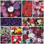 70's Lucky Dip Offer (Ready Plants) Bedding Plants Annuals - £7.99 + Free Delivery @ Saga Holidays