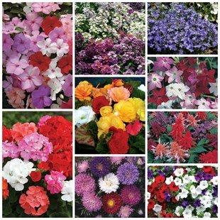 90 flowers for £7.99 - jerseyplantsdirect