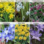 150 spring-flowering bulbs for £5.65 at Thompson & Morgan